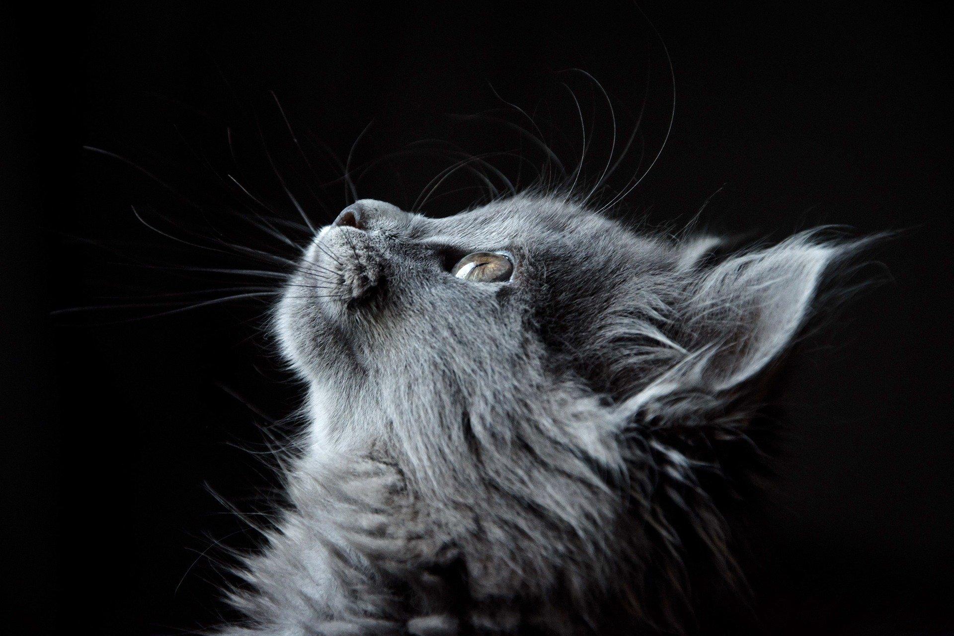 mutuelle chat